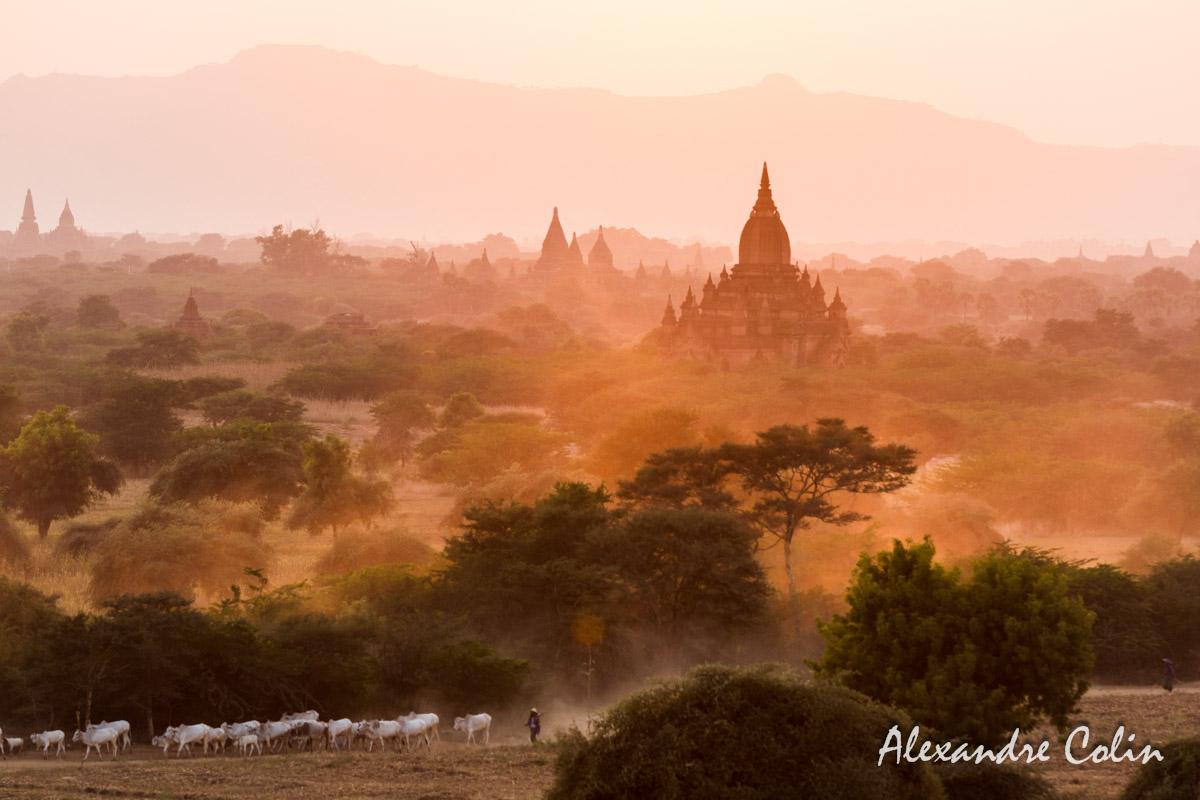 Burma_Bagan-13