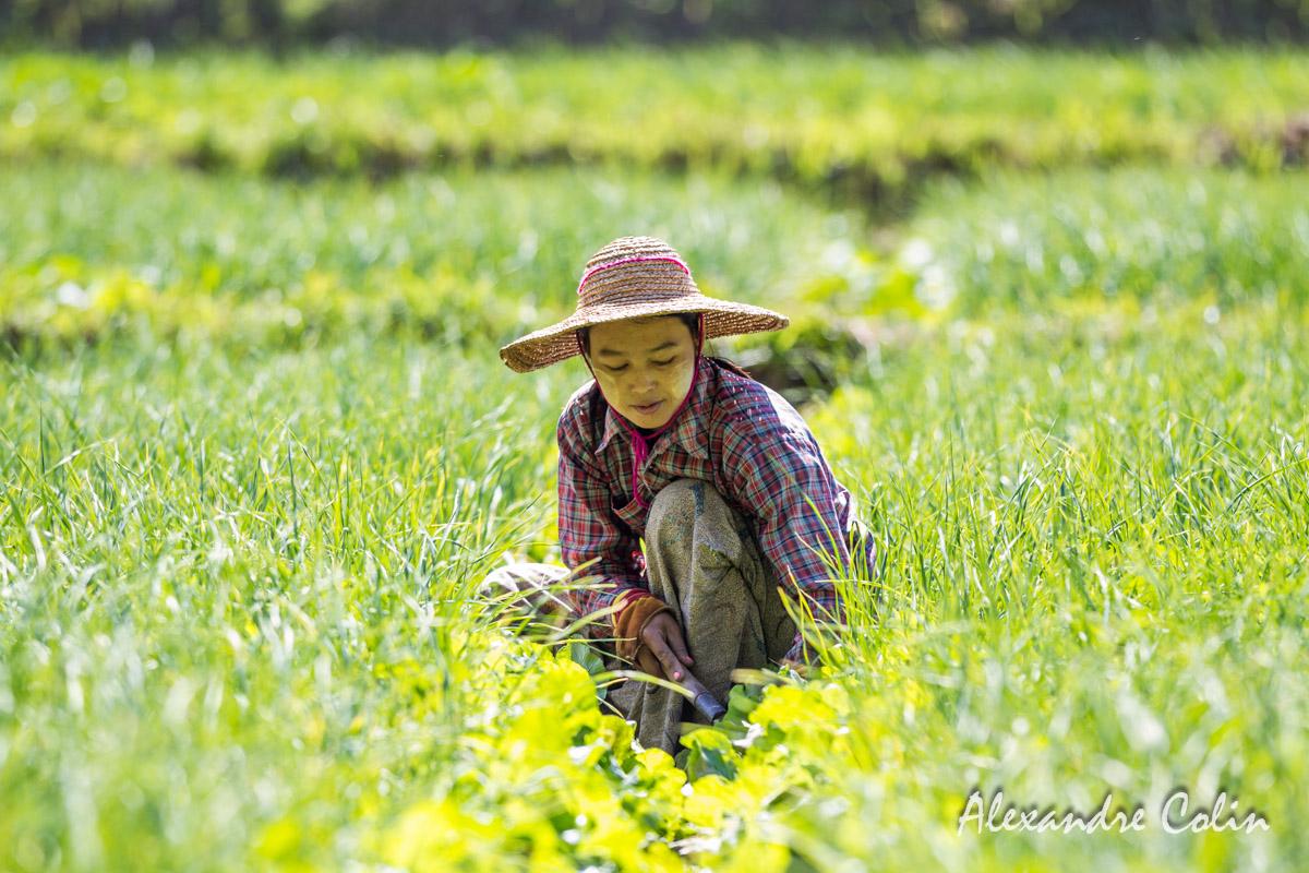 Burma_life-48